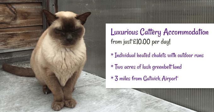 Luxury Cattery Accommodation from £10.00 per day.